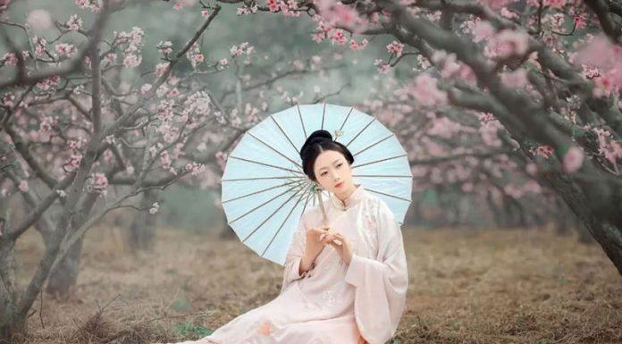 Spring Pear Flower