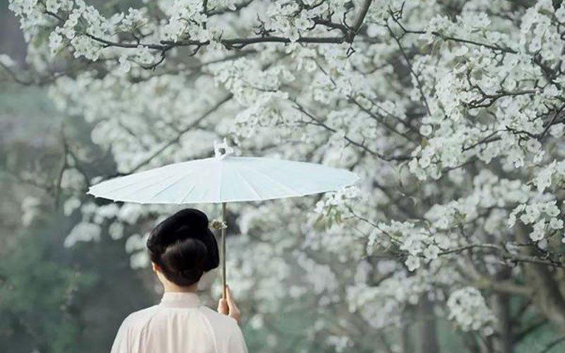 Spring Pear Flower with Hanfu
