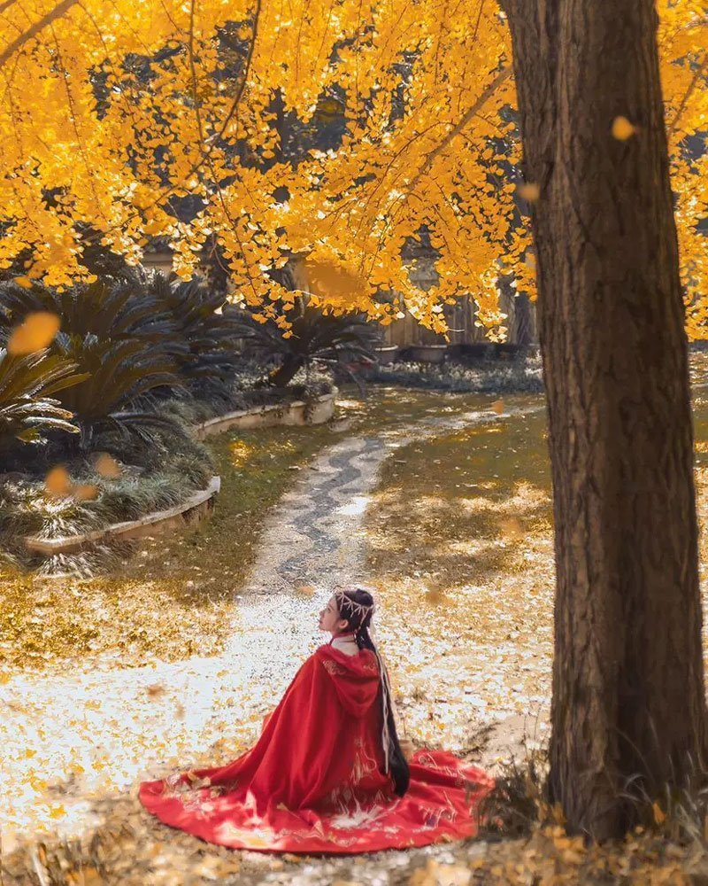 Hanfu Photo | Golden Leaves and Cloaks Girl