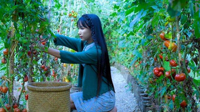 Li Ziqi vegetable garden