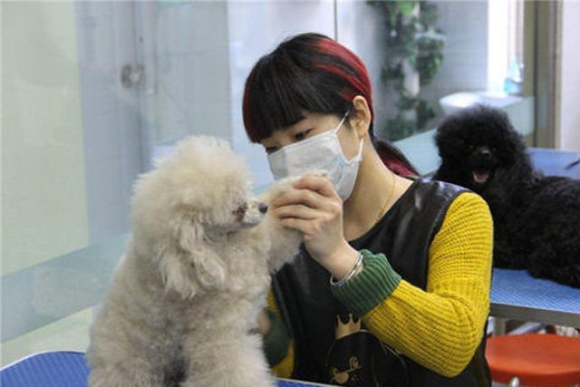 How to Choose a Pet Care Service in China
