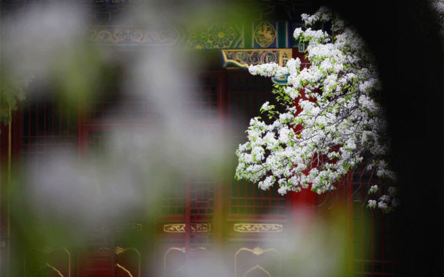 Flower Festival: The Most Beautiful Festival of Spring