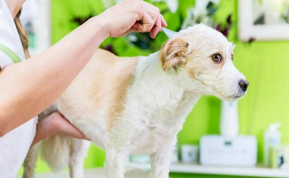 Can Foreigners Keep Pets in China 2021